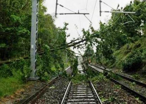 Copacii din zona CFR vor putea fi tăiați mai ușor